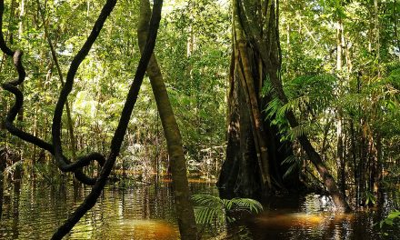 Ten Amazing Things to Do in the Amazon