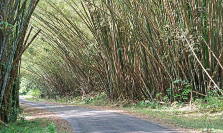 The Beautiful Bamboo Cathedral of Trinidad