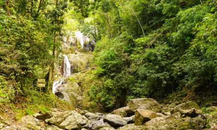 Check Out Argyle Falls in Tobago
